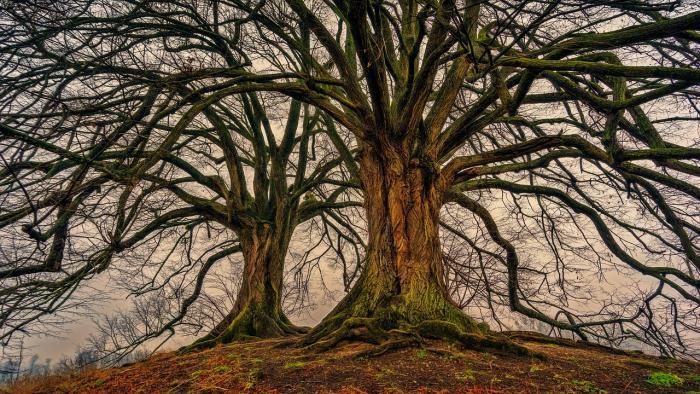 tree-3097419 1280